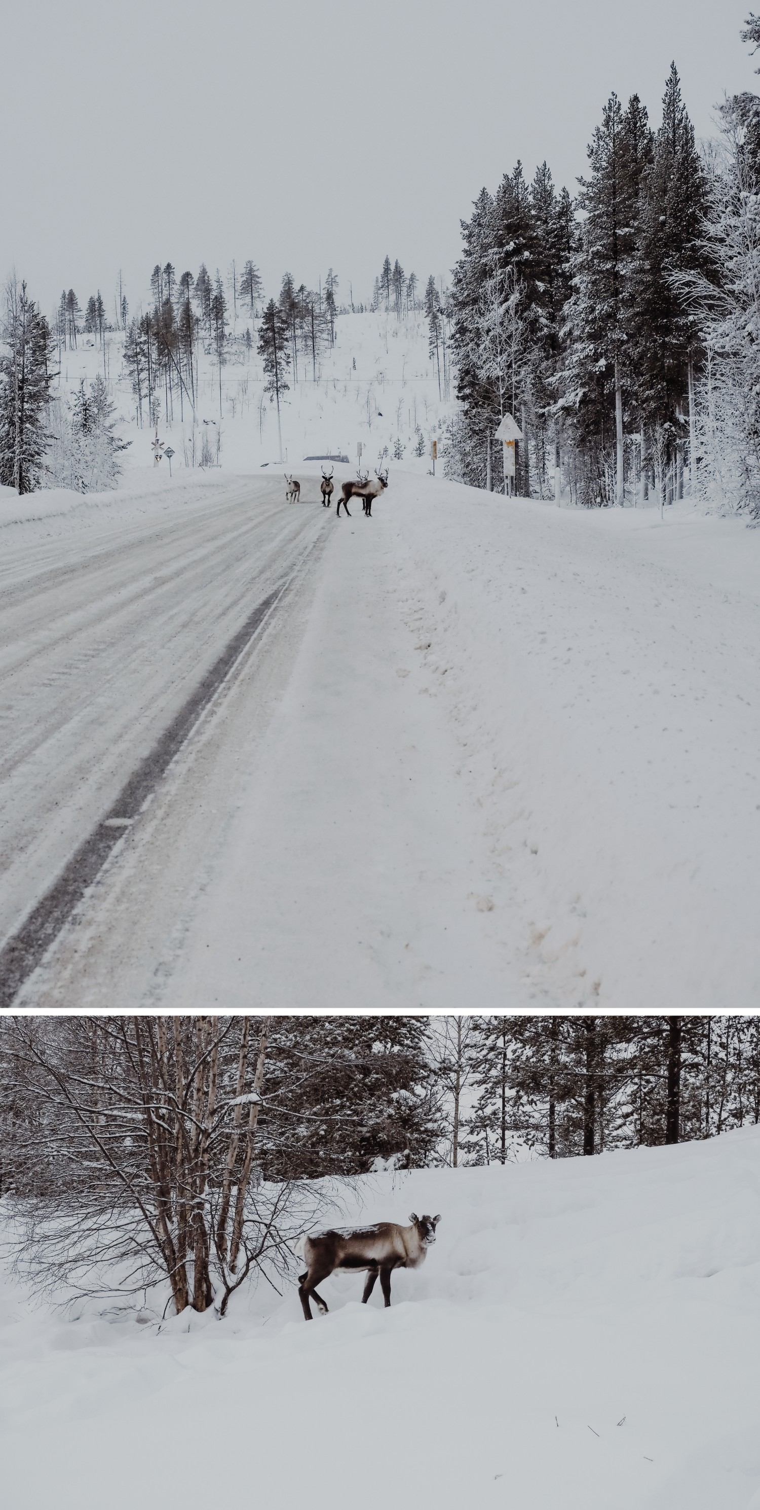 lapland-collage-2